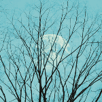1790 - Moon and Trees
