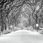 4727 - Winter Central Park Grap
