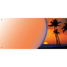 1219 - Sunset Palm Tree Banner