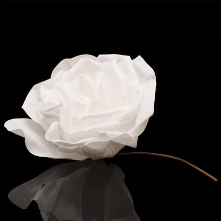 White Foam Rose