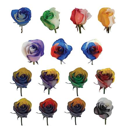 Two-tone Roses - Package of 50