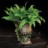 Fern and Ivy Planter Kit