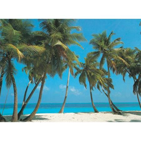 Palm Trees Photo Mural